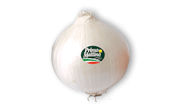 Selected white onion