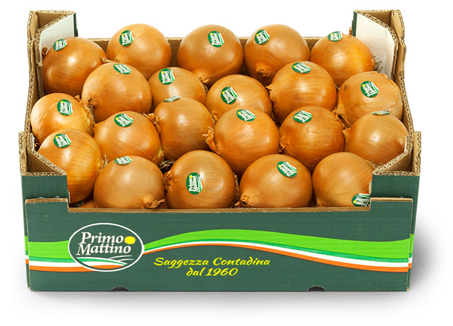 Selected golden onion - Cardboard box