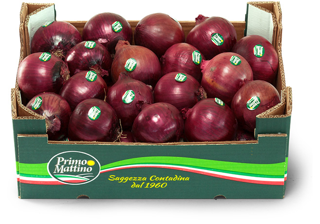 Selected red onion - Cardboard box