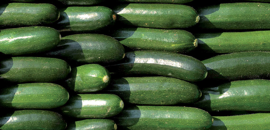 Long courgettes